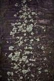 Vieja textura de la corteza Imagen de archivo libre de regalías