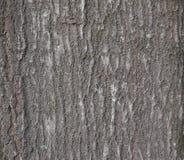 Vieja textura de la corteza de árbol del grunge Fotos de archivo