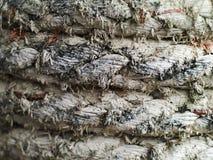Vieja textura de la cuerda de la nave Fotos de archivo libres de regalías