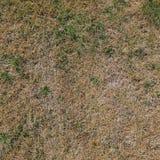 Vieja textura de la hierba Imagen de archivo