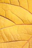 Vieja textura de la hoja Imagen de archivo libre de regalías