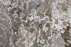 Vieja textura de la pared del cemento Fotografía de archivo libre de regalías