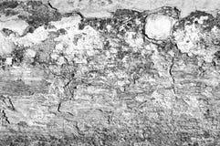Vieja textura de la pintura Fotos de archivo libres de regalías