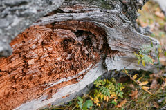Vieja textura de madera áspera De madera Fondo Árbol grieta exótico Naturaleza Imagen de archivo