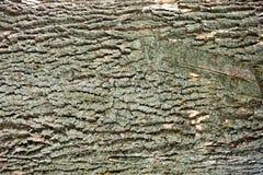 Vieja textura de madera única de la corteza - fondo Imagenes de archivo