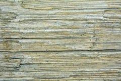 Vieja textura de madera fotografía de archivo libre de regalías