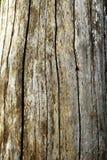 Vieja textura de madera 2 Foto de archivo libre de regalías
