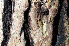 Vieja textura de madera de la corteza Imagenes de archivo