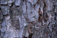 Vieja textura de madera de la corteza de árbol Foto de archivo