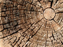 Vieja textura de madera de los anillos de árbol Imágenes de archivo libres de regalías