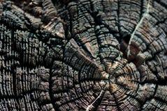 Vieja textura de madera de los anillos de árbol Imagen de archivo