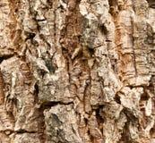 Vieja textura de madera del árbol Foto de archivo