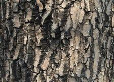 Vieja textura de madera del árbol Fotos de archivo