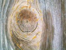 Vieja textura de madera del fondo Fondo de madera del vintage con los nudos y los agujeros de clavo Fotos de archivo