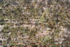 Vieja textura de madera del grunge Imagen de archivo libre de regalías
