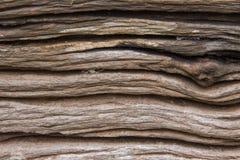 Vieja textura de madera del registro Foto de archivo