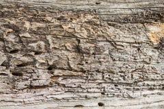 Vieja textura de madera, superficie de madera natural, ideal para los fondos Fotografía de archivo