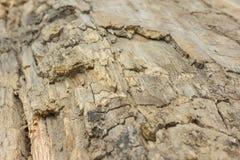 Vieja textura del árbol Fotos de archivo libres de regalías