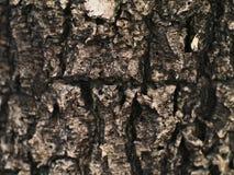 Vieja textura del árbol Imagenes de archivo