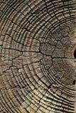 Vieja textura del corte del árbol de pino Fotos de archivo libres de regalías