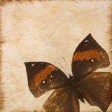 Vieja textura del papel de la mariposa del grunge Fotos de archivo