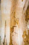 Vieja textura mouldering de madera de roble Foto de archivo libre de regalías