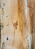 Vieja textura mouldering de madera de roble Fotos de archivo libres de regalías