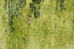 Vieja textura pintada agrietada. Fotografía de archivo libre de regalías