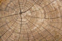 Vieja textura seccionada transversalmente de madera del color natural Fotos de archivo
