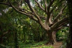 Viejas imágenes de la acción del árbol Foto de archivo