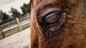Viejas texturas del caballo del trabajo de un ojo Foto de archivo libre de regalías