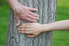 Viejas y jovenes manos en tronco de árbol Imagenes de archivo
