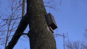 Viejo batbox clásico de madera para los mamíferos que vuelan metrajes