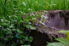 Viejo bien en la hierba Fotos de archivo