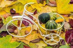Viejo blanco, bicicleta del vintage con la cesta llenada de las calabazas del bebé en el otoño coloreó las hojas Imagenes de archivo