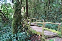 Viejo camino de madera a través del bosque Imagen de archivo