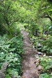 Viejo camino del jardín rodeado con verdor Imagenes de archivo