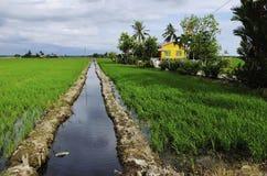 Viejo campo de la casa y de arroz Fotografía de archivo libre de regalías