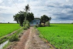 Viejo campo de la casa y de arroz Fotos de archivo libres de regalías