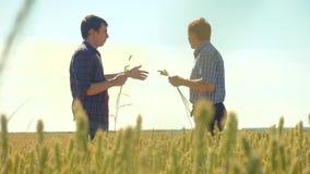 Viejo campo de trigo del hombre del apretón de manos del verano de dos granjeros que corre en el pan del trigo del campo vídeo de almacen de metraje de vídeo