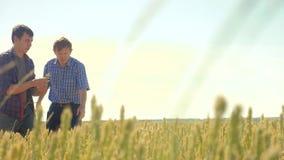 Viejo campo de trigo del hombre del verano de dos granjeros que corre en el pan del trigo del campo vídeo de la cámara lenta conc metrajes