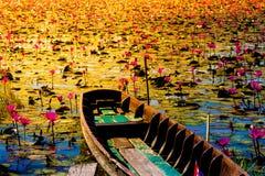 Viejo campo enselvado o jardín del loto del barco y del flor de Beautyful Imagen de archivo libre de regalías