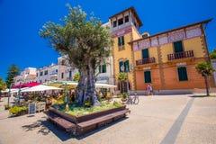 Viejo centro de ciudad de Alghero con el olivo y las casas coloridas, Alghero, Cerdeña, Italia, Europa Imagen de archivo libre de regalías