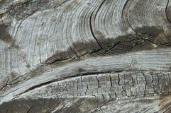Viejo czt resistido del tablero de madera si tronco de árbol Imagenes de archivo