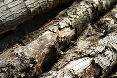 Viejo detalle 1 de la madera de construcción del árbol de roble Imagen de archivo
