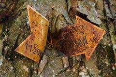 Viejo firme adentro el árbol imagen de archivo