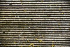 Viejo fondo arbolado surcado del musgo Imagen de archivo
