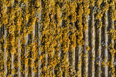 Viejo fondo arbolado surcado del musgo Fotografía de archivo