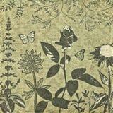 Viejo fondo botánico Imagen de archivo