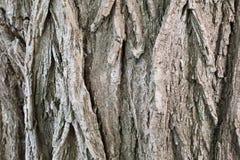 Viejo fondo de la corteza de árbol fotografía de archivo libre de regalías